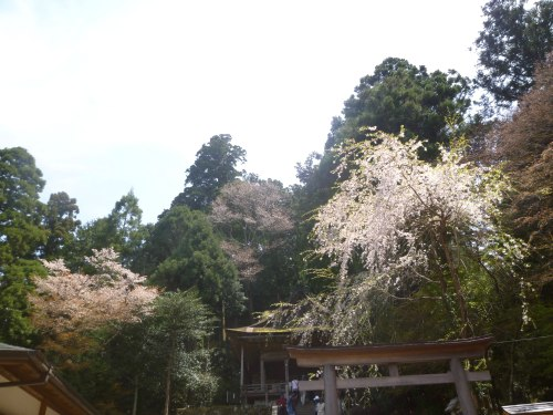 吉野まで~♪_d0078486_4401326.jpg