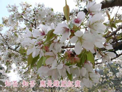 b0101387_1036163.jpg