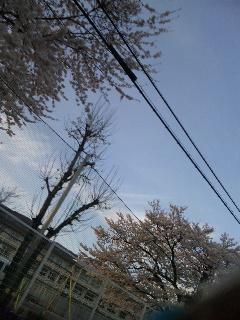 桜が……_d0148408_20311264.jpg