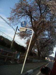 桜が……_d0148408_20311291.jpg