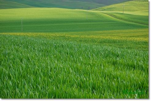 Prato Verde_f0062510_615276.jpg