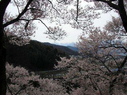 2010年4月18日 高遠 桜ツーリング<2010-NO3>  _d0038712_0472156.jpg