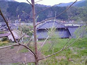 新緑の候_c0060919_16385330.jpg