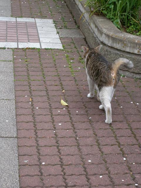 公園で猫_e0089232_23512868.jpg