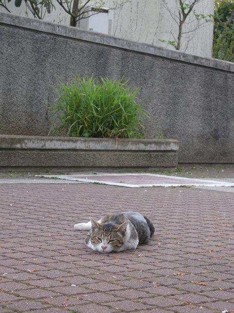 公園で猫_e0089232_23515559.jpg