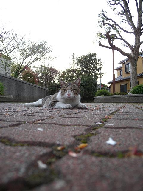 公園で猫_e0089232_2352189.jpg