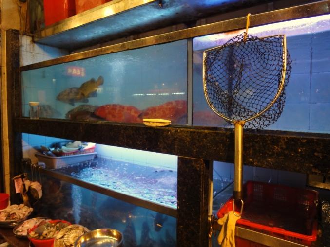おいしい香港♪ ~シャコ食べに行こう! 金山海鮮酒家~_d0145934_13495152.jpg