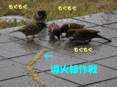 b0158061_20252432.jpg