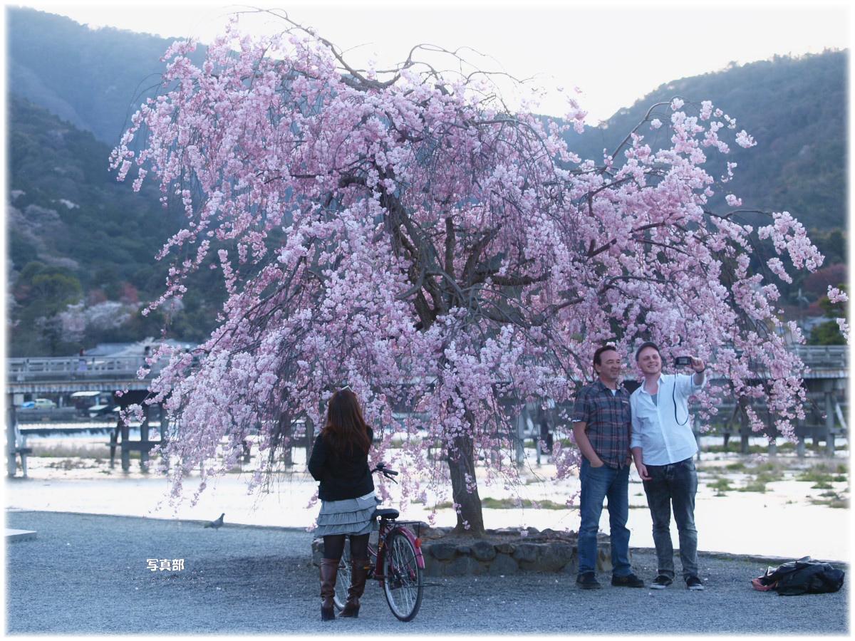 京都 嵐山 桜_f0021869_2204281.jpg
