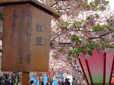 今年の「造幣局桜の通り抜け」♪_d0136282_19463099.jpg