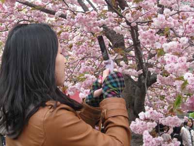 今年の「造幣局桜の通り抜け」♪_d0136282_19473276.jpg