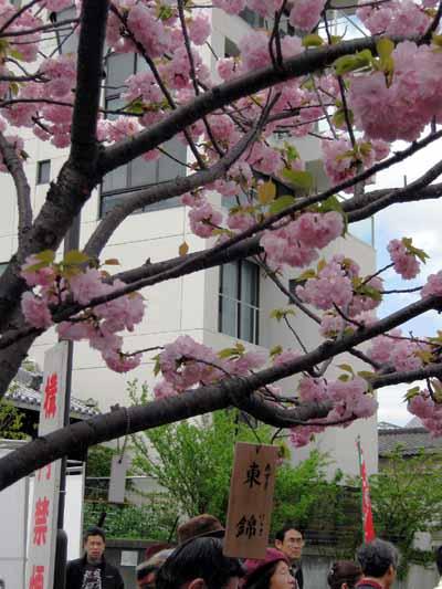 今年の「造幣局桜の通り抜け」♪_d0136282_19474287.jpg