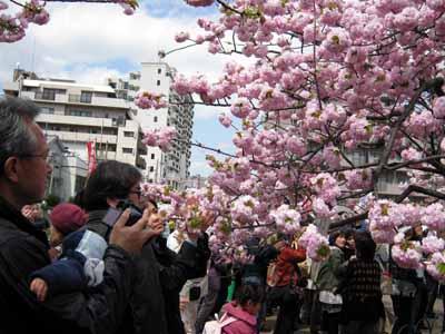 今年の「造幣局桜の通り抜け」♪_d0136282_19475636.jpg