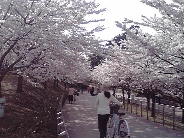 市役所ロビコン〜春のコンサート〜ヴァイオリン&箏。_e0046190_16211475.jpg