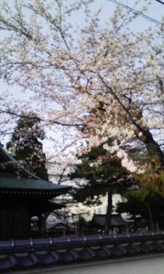 花冷え_f0168392_22493946.jpg