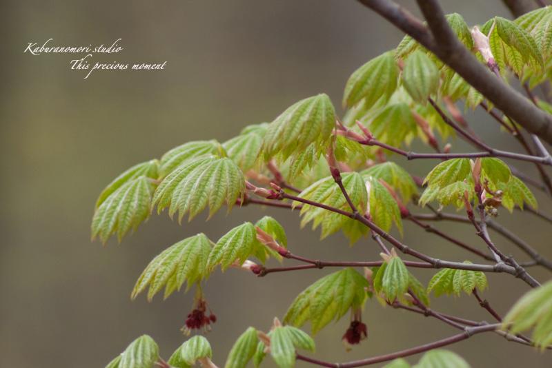 寒い中でも緑増す日々_c0137403_17215275.jpg