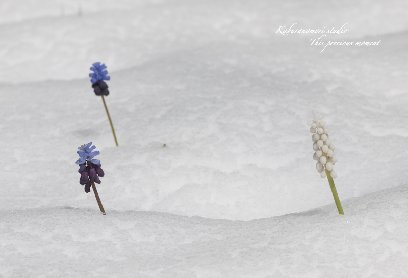 寒い中でも緑増す日々_c0137403_1726302.jpg