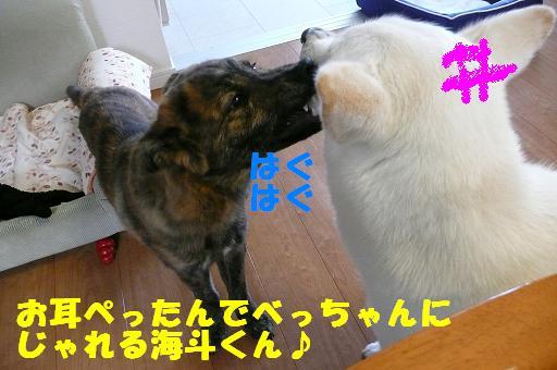 f0121712_15656.jpg