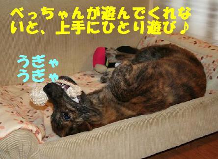 f0121712_162641.jpg