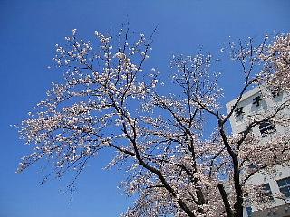 「日本に生まれてよかった!」_d0046025_15325636.jpg