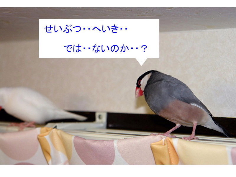 a0019545_18411312.jpg