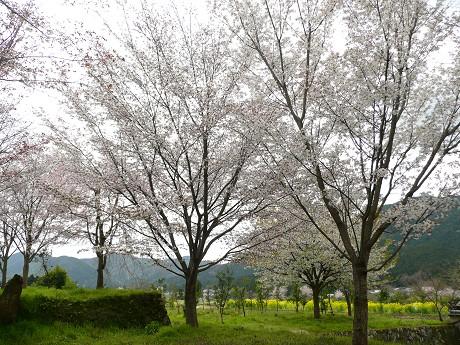 c0057946_2010183.jpg