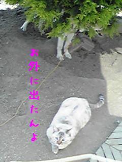 b0151748_1242378.jpg