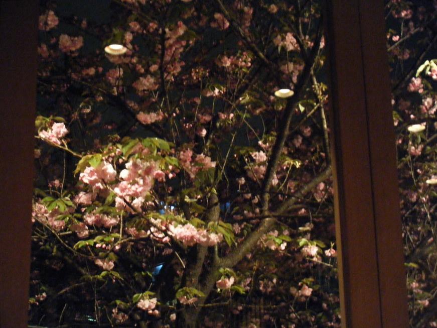 ひさびさ東京デー!遅めの花見も_e0142956_1252969.jpg