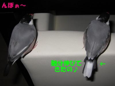 b0158061_19564532.jpg