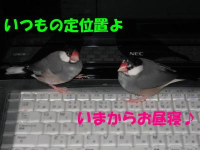 b0158061_1957013.jpg