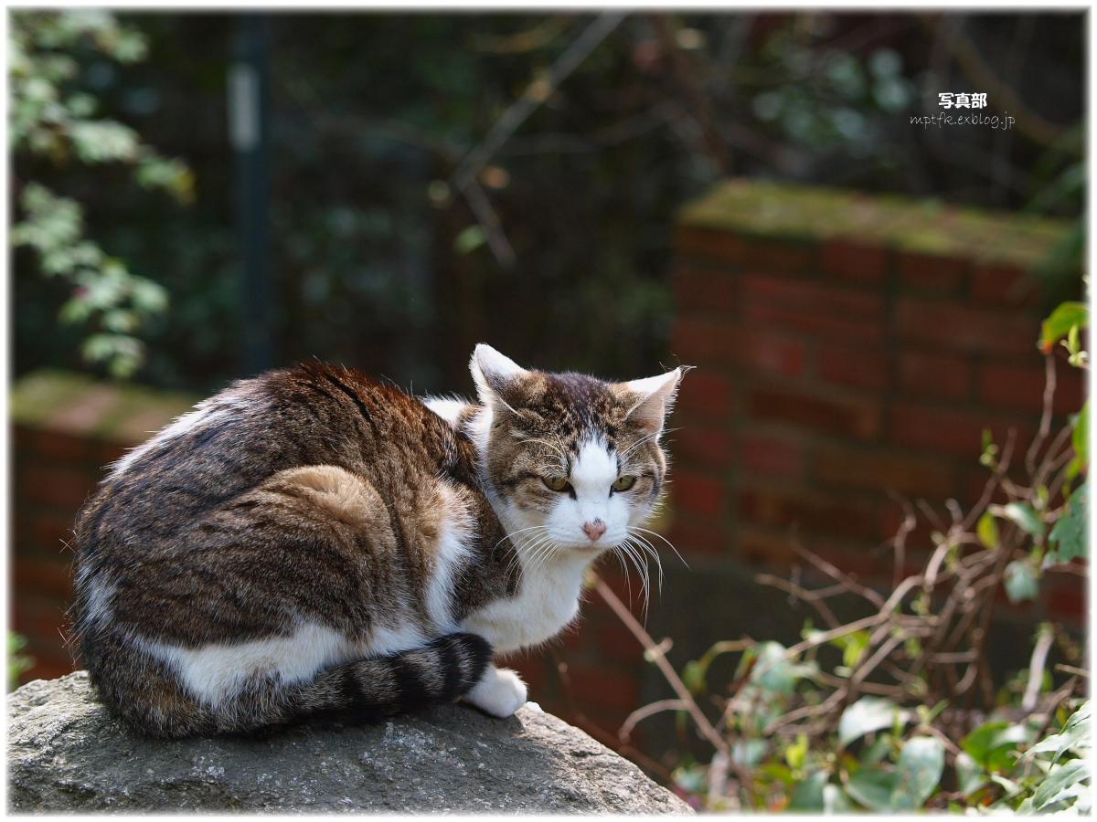 猫にゃん_f0021869_21585619.jpg