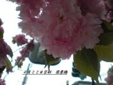b0132593_18451365.jpg