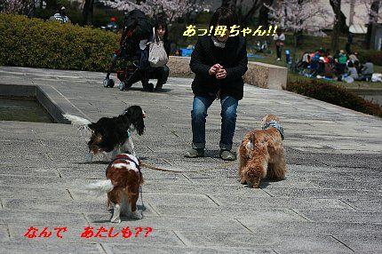 b0021297_8335951.jpg