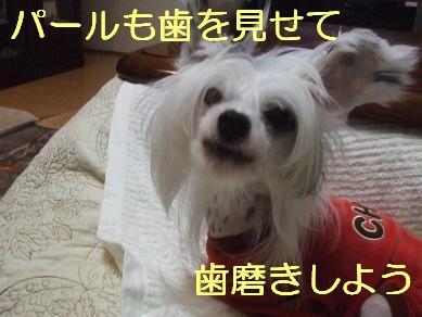 f0179203_7295816.jpg