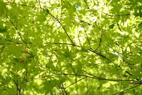 新緑の西山公園_f0229508_11361276.jpg