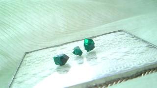 緑の王国 その2_c0157242_5145553.jpg