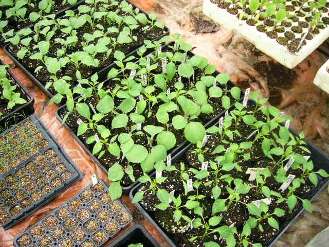 畑の土は水分で飽和状態なので・・苗床作業_c0222448_1131873.jpg