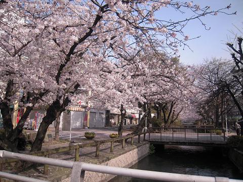 松江の桜と城と ~西国桜旅④_b0050651_21411647.jpg