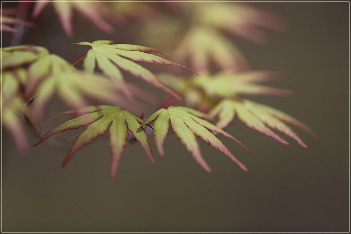 日本庭園から_c0188951_2065187.jpg