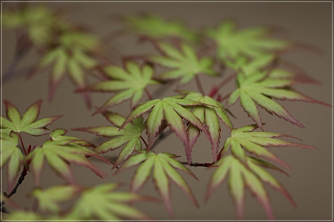 日本庭園から_c0188951_2073141.jpg