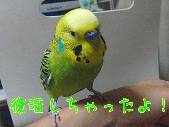 f0196665_01121.jpg
