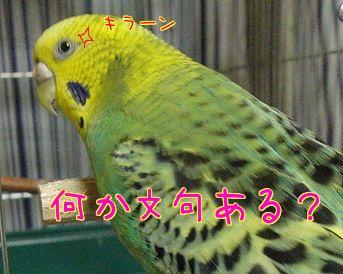f0196665_0113174.jpg