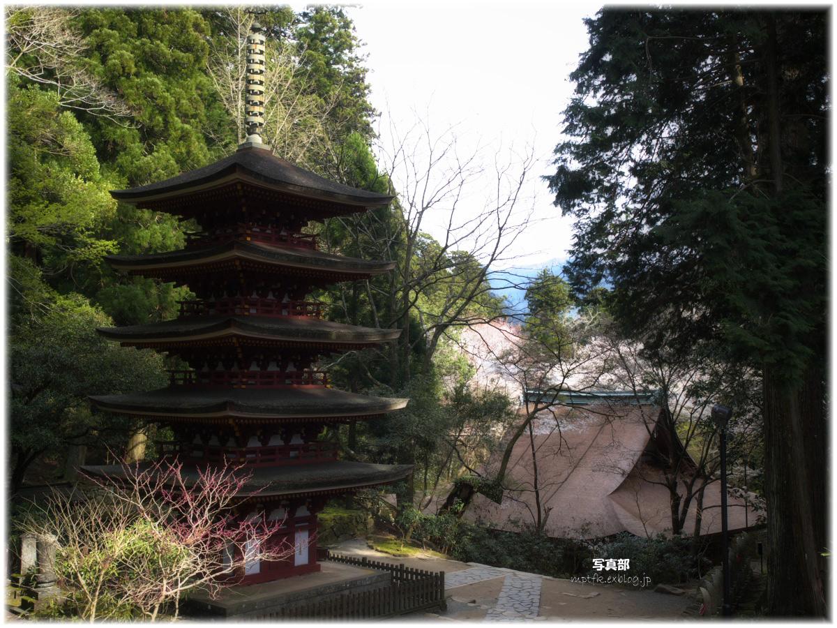 奈良 室生寺 桜_f0021869_1283113.jpg