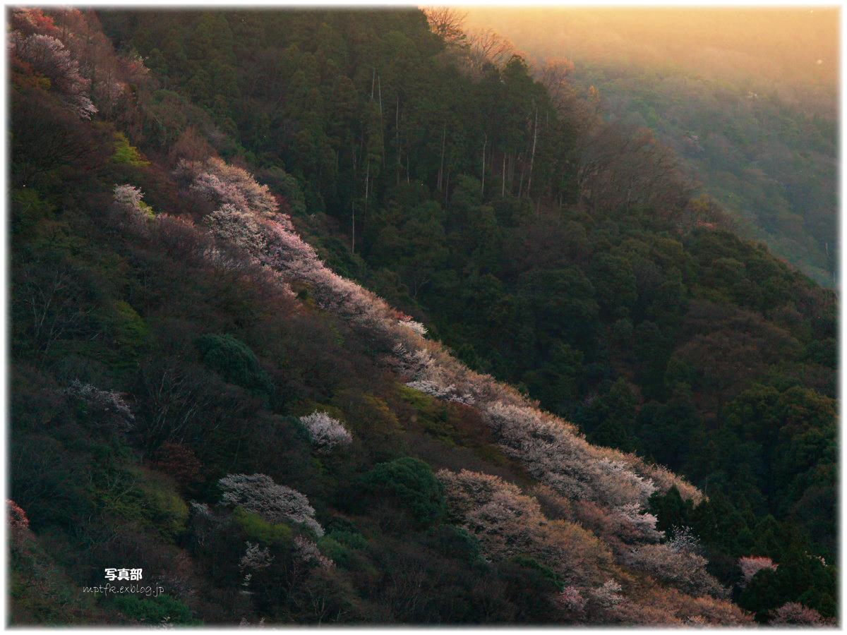 京都 嵐山 桜_f0021869_38157.jpg