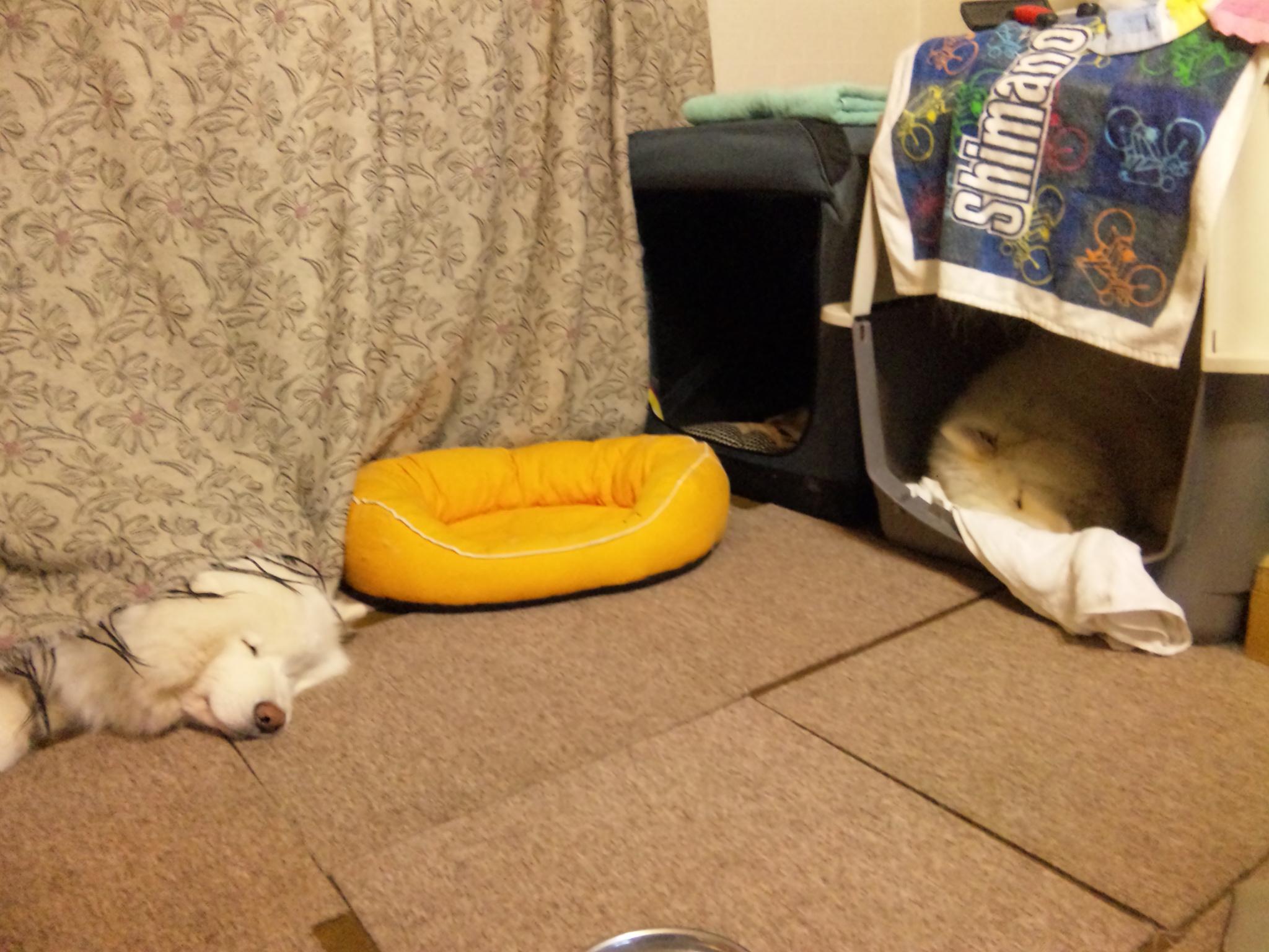 ベッド その後・・・。_a0049296_2195851.jpg