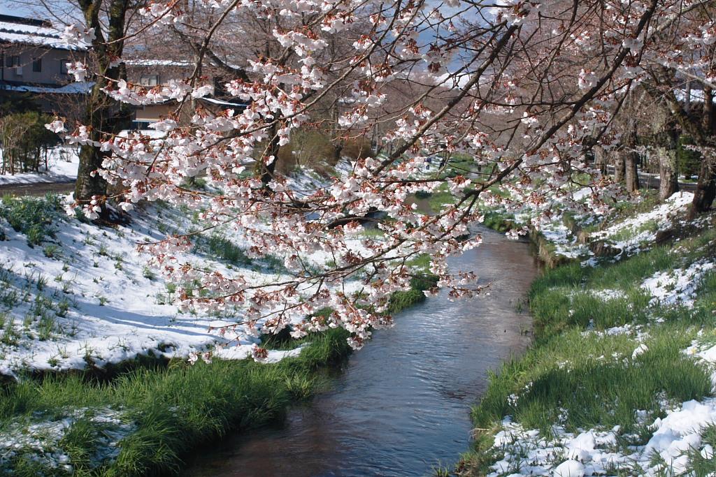 忍野の春_b0116600_22543272.jpg