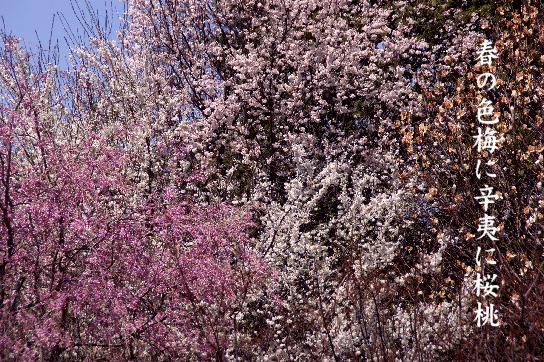 春の色_e0099713_1947486.jpg