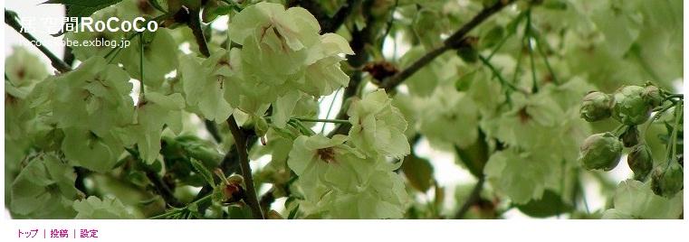 緑色の桜_f0223914_956584.jpg