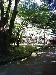 上賀茂神社_e0128024_16421781.jpg