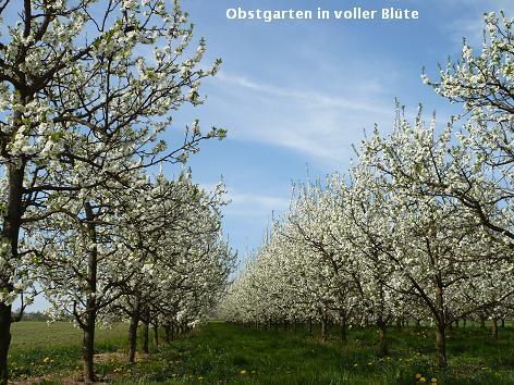 果樹園の春_d0144726_416748.jpg